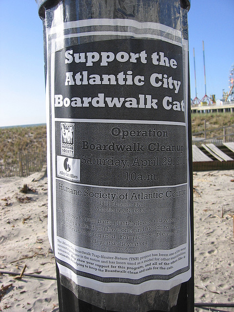 boardwalk cats support