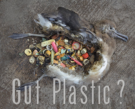 gut_plastic_ocean_girl_project_hawaii