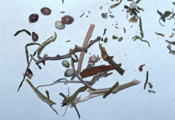 stems and seeds