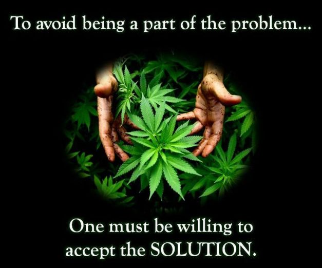 cannabis is the solution