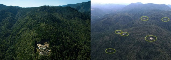 pot farms destroys forest