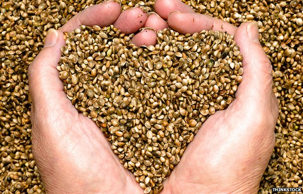 pot seeds hand heart