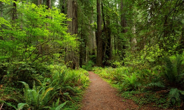 humboldt-county-forest-path