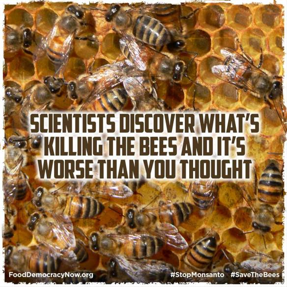 worse-than-you-thought-bees